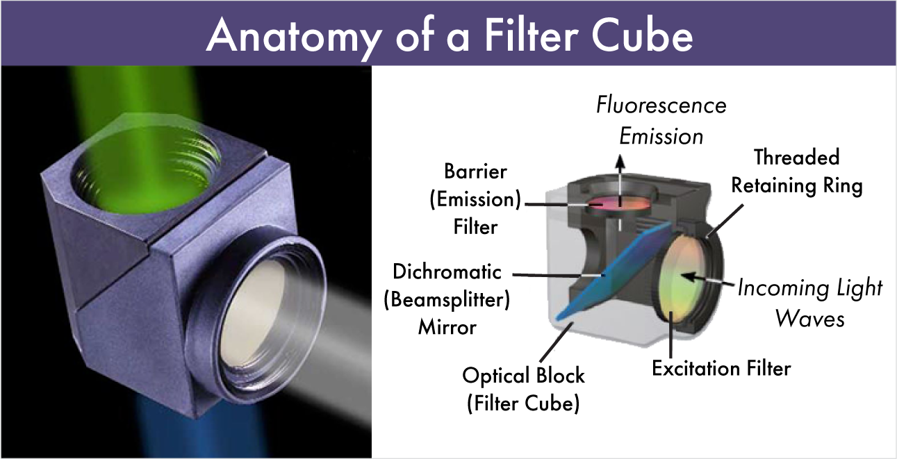 Anatomy of a Filter Cube-Emission, Dichroic, Excitation